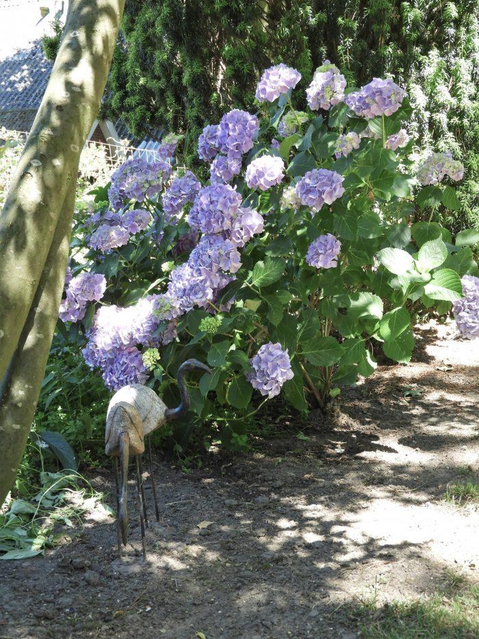 Hortentia's Wildemansheerd