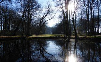Het bos achter de Fraeylemaborg.